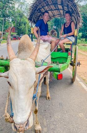 Cow 'n Cart ride